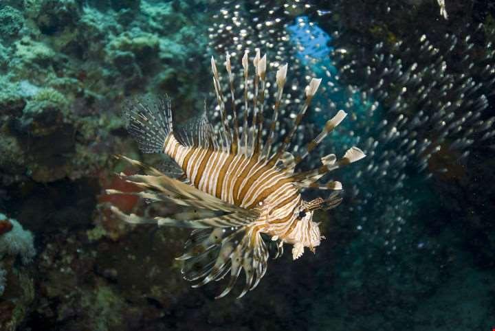 Sharm El Sheik Scuba Diving-Sharm El Sheik Scuba Diving