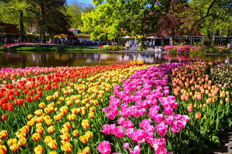Dutch Tulip Gardens-Dutch Tulip Gardens