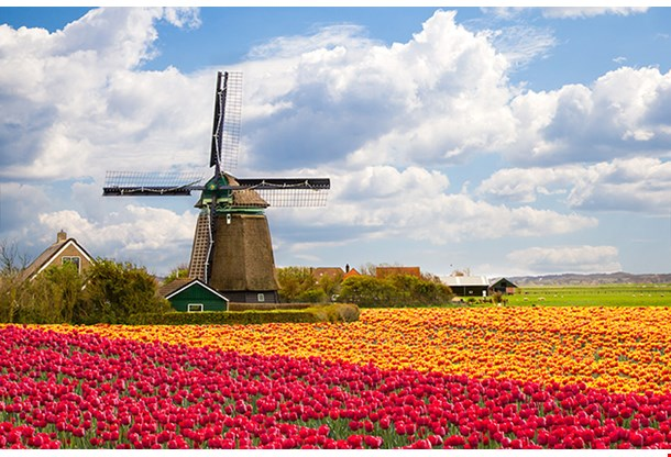 Windmill On Tulip Field, Holland