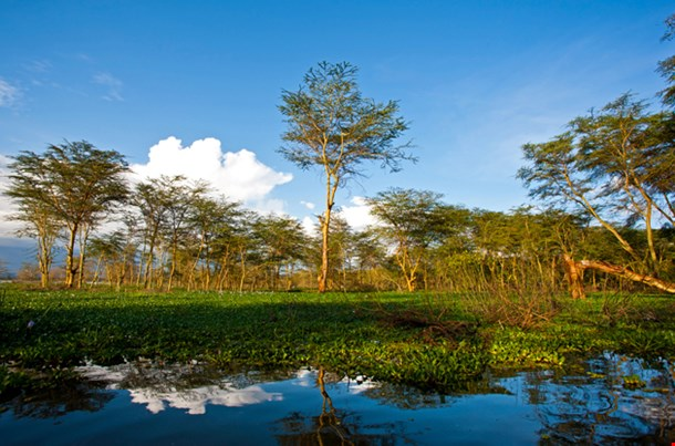 Landscape At Lake Naivasha In Kenya
