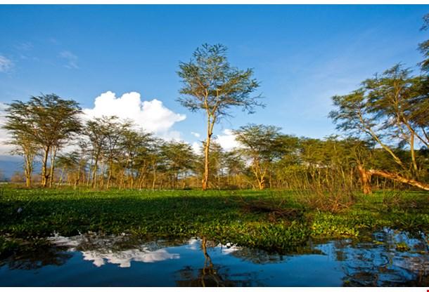 Landscape At Lake Naivasha In Kenya