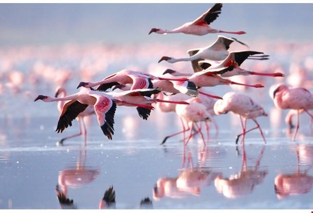 The Lesser Flaming Lake Nakuru National Park