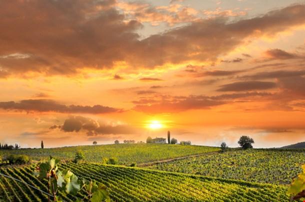 Chianti Vineyard Landscape Tuscany