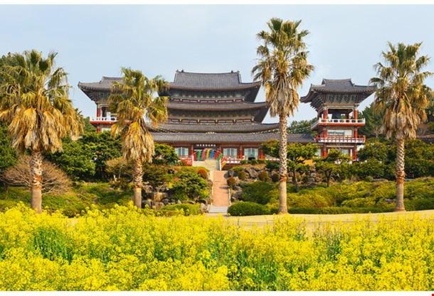 Rape Flowers At Famous Yakcheonsa Buddhist Temple Jeju