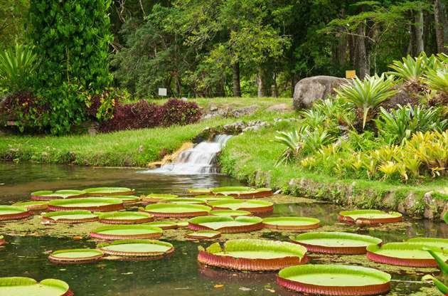botanical-garden-Botanical Garden