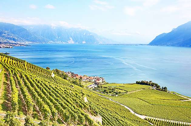 vineyards-lavaux-region-over-lake-leman-lake-of-geneva-Vineyards of the Lavaux Region Over Lake Leman, (Lake Of Geneva)