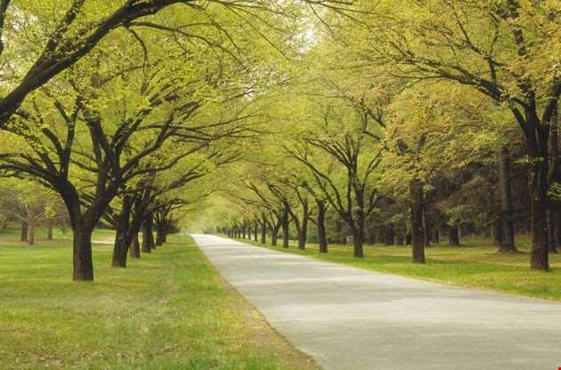 Leafy Avenue Canberra-Leafy Avenue Canberra