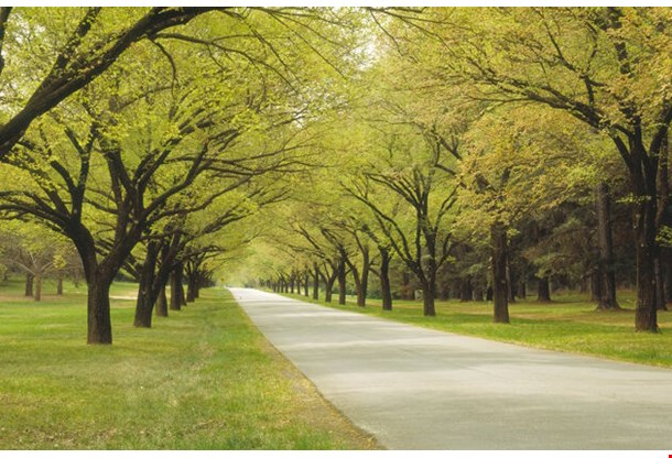 Leafy Avenue Canberra