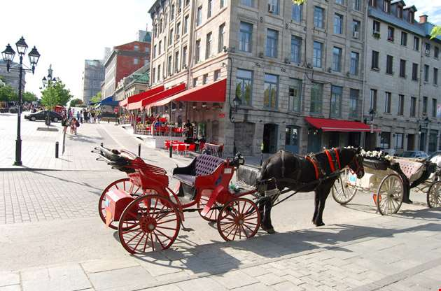 horse-carriafge-in-Horse Carriafge In
