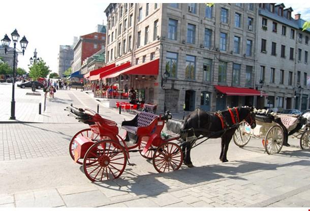 Horse Carriafge In