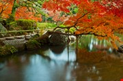 japanese-style-park-and-garden-Japanese Style Park And Garden