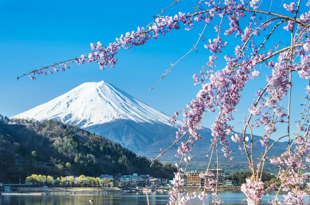 mt-fuji-and-cherry-blossom-at-lake-kawaguchiko-Mt Fuji And Cherry Blossom At Lake Kawaguchiko