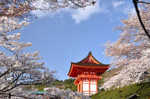 the-shrine-surrounding-with-many-cherry-blossom-The Shrine Surrounding With Many Cherry Blossom