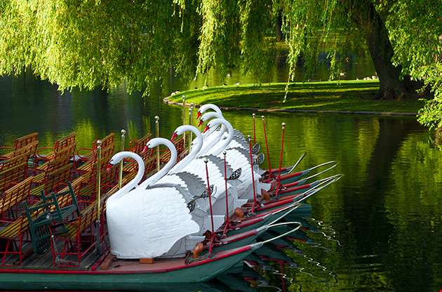 swan-boats-at-the-boston-public-garden-Swan Boats At The Boston Public Garden