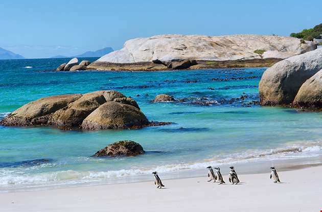 penguins-boulders-beach-nature-reserve-near-cape-town-Penguins Boulders Beach Nature Reserve Near Cape Town