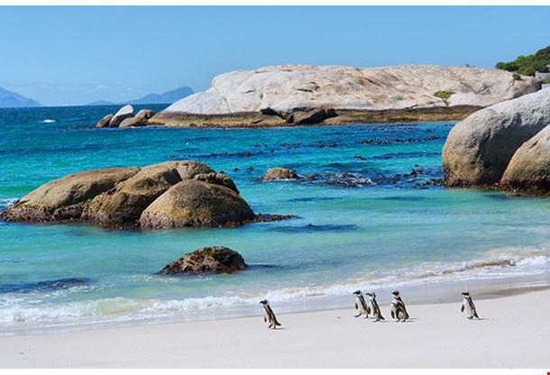 Penguins Boulders Beach Nature Reserve Near Cape Town