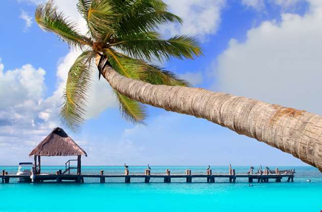 palm-tree-in-tropical-perfect-beach-at-cancun-Palm Tree In Tropical Perfect Beach At Cancun