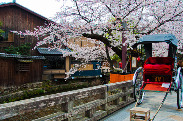 japanese-rickshaw-with-sakura-in-gion-district-kyoto-Japanese Rickshaw With Sakura In Gion District Kyoto