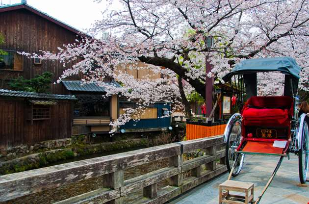 japanese-rickshaw-with-sakura-in-gion-district-kyoto-Japanese Rickshaw With Sakura In Gion District Kyoto